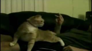 Trolololol Cat