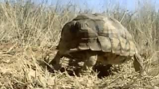 Fantastiska Djur Film   Del 24 Sköldpadda