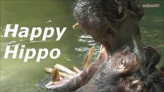 HAPPY HIPPO :) giant hippopotamus JAW -  gigantisches Flusspferd Maul / Zoo Karlsruhe