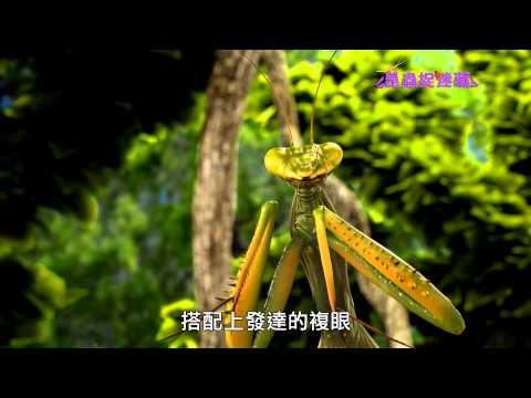 《昆蟲捉迷藏》天生完美的掠食者【昆蟲狙擊手:螳螂】 - YouTube