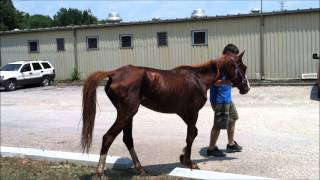 The Most Amazing Horse Starvation Rescue you May ever see
