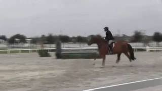 Video of I KANDI ridden by BERRY PORTER from ShowNet!