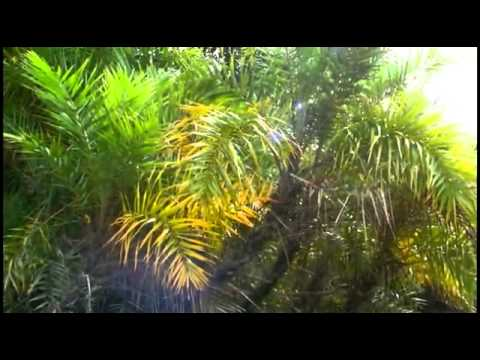 largest mangrove forest – Part 1.flv