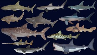 Sharks - Animals Series - The Kids' Picture Show (Fun & Educational Learning Video)