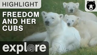 Freedom Gets Kisses from Akiak and Sura - Live Cam Highlight