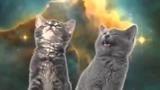 Kočičí píseň