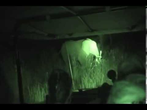 Rec Diving Elephant Encounter at Night in South Africa Feb 2012