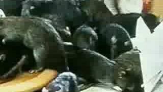 Gargoyle - Drown (Music Video)