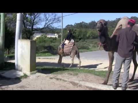 Camel_ride_Morocco.mov
