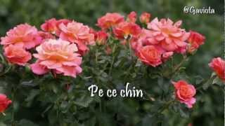 """ƸӜƷ•°*""""˜˜""""°Lăuntrul trandafirilor-Rainer Maria Rilke""""˜˜""""*°•ƸӜƷ"""
