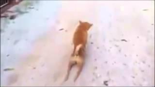 video de cachorrinho...(coitadinho)