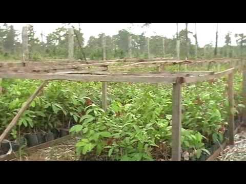 Nicaragua – RAAN Region – Reforestation Project following Hurricane Felix