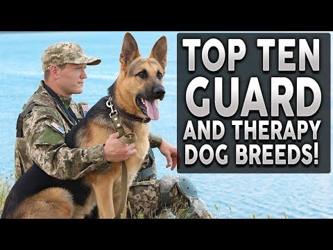 Top 10 GUARD and THERAPY Dog Breeds!