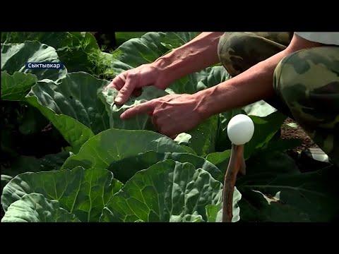 Как уберечь растения от вредителей? Советы специалистов Россельхозцентра
