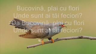 ADDA-Canta cucu(Lyrics/Versuri)