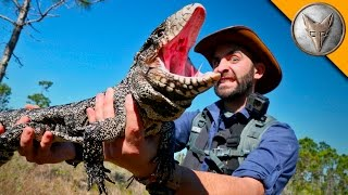 Reptilian Invaders in Florida! width=