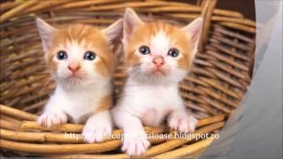 poze pisici mici