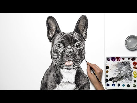 How to paint a dog portrait in realistic watercolour