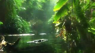Video meditação - Caminhando pelo bosque.wmv