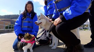 Go Kayaking With Rosie The Rescue Cat And Her Best Pal, Lilo The Dog