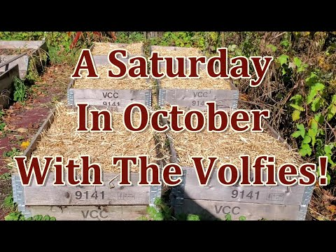 A Saturday In October With The Volfies!