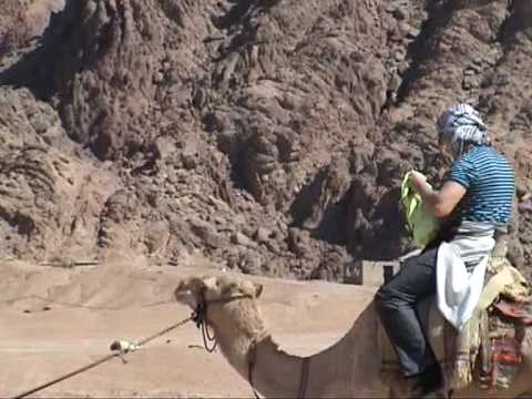 camel.mpg
