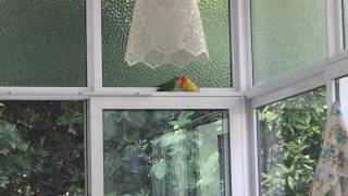 Sunroom conversation by my super lovely parrots on a beautiful Sunday morning 🌺