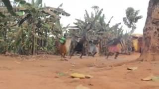 Sorry (Justin Bieber) African Dance