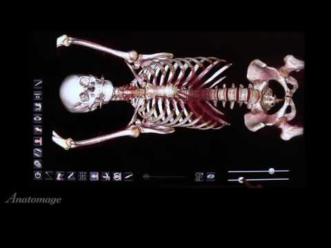 How to use the Female Full Body with Models in Anatomage Table 5.0