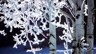 Juan Rios - Pine Trees