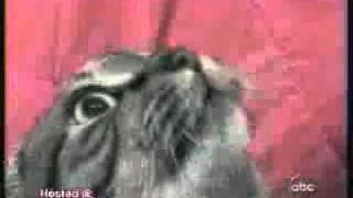 Pisica care canta !! =)) ( Cat singing )