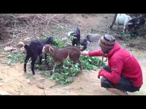 Pabbi í Nepal