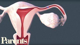 How Sperm Meets Egg | Parents width=
