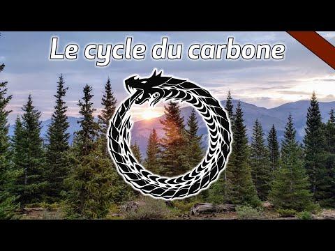 Le cycle du carbone - CARBONE#1