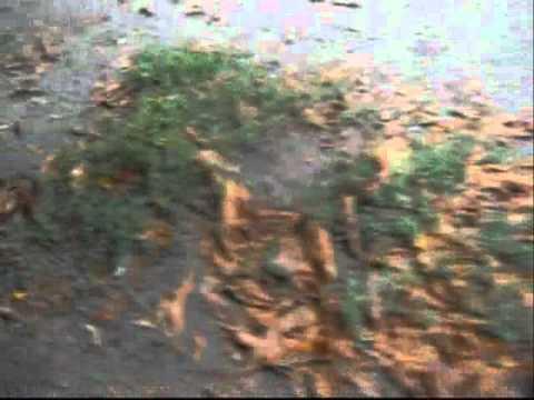 28 08 2012 After rain   Zaporizhzhya Ukraine
