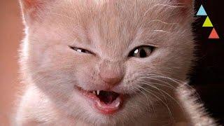 10 cosas diabólicas que hacen tus gatos