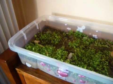 Come realizzare un terrario per tartarughe animali dal mondo for Luce per tartarughe