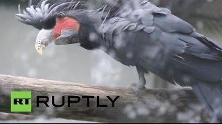 China: Cockatoo's 3D-printed beak returns bird to full confidence