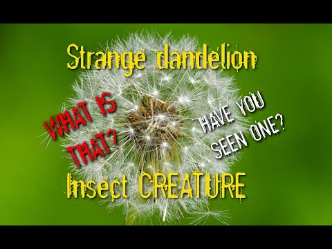Dandelion-like Insect/Creature