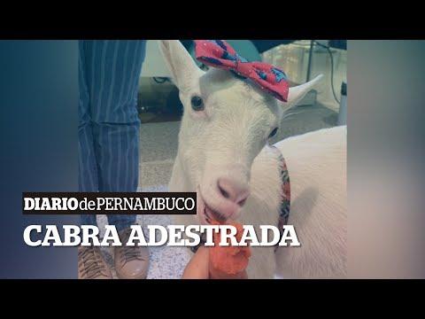 Gerusa Tyfanny - A cabra de estimação