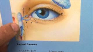 Tear Duct Surgery -endoscopic transnasal