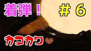 【開封動画】 クワガタ、カブトムシ届きました #6