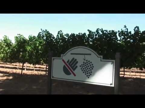 South Africa. Part13. Wine