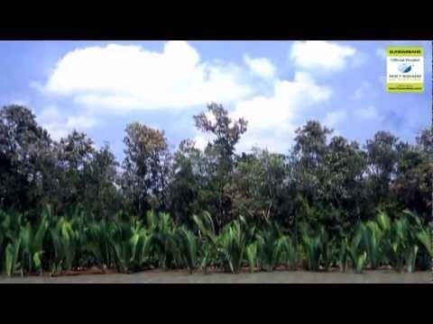 Sundarbans Theme song new 7 wonders.flv