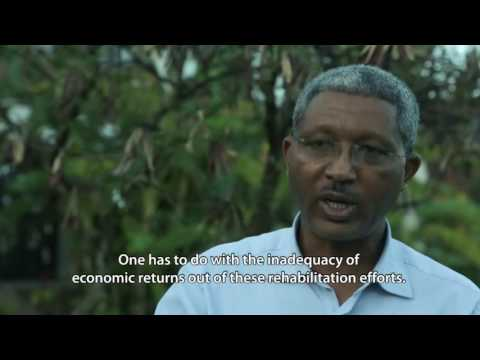 Ethiopia see forestry as a key solution to climate change