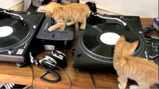 Funny DJ Kittens