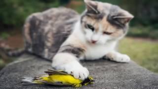 Poema: Passeris (pájaro muerto). Eduardito Leyva (Prod. Gany Producciones)