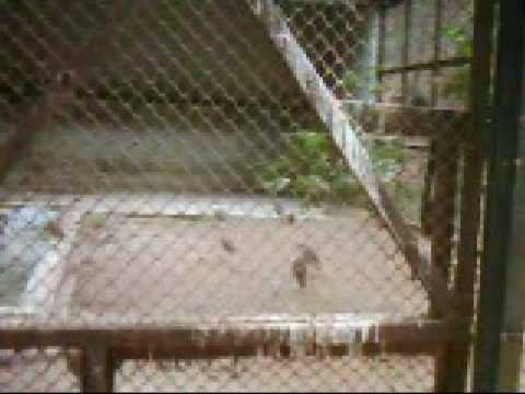 Our National Zoo_Ep 17