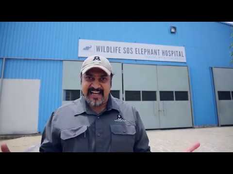Virtual tour of Indias First Elephant Hospital