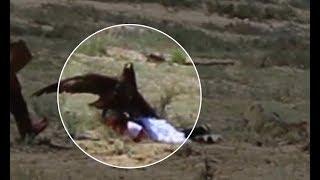 Golden eagle attacks 8 yo girl at ethnofestival in Kyrgyzstan